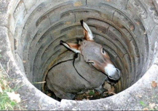 donkey-in-well