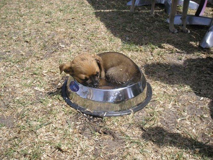 sleepdog4-8BPw